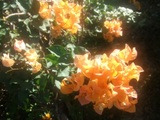 070423flower.JPG