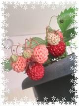 080607berry.jpg
